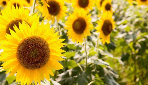認知症高齢者によくある夏場の寒がりや厚着で脱水症状を起こさないために
